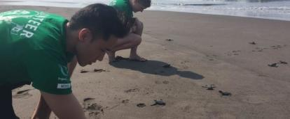 Students release turtles for their conservation volunteering in Mexico.